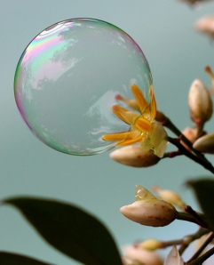 A photo of a flower inside a bubble